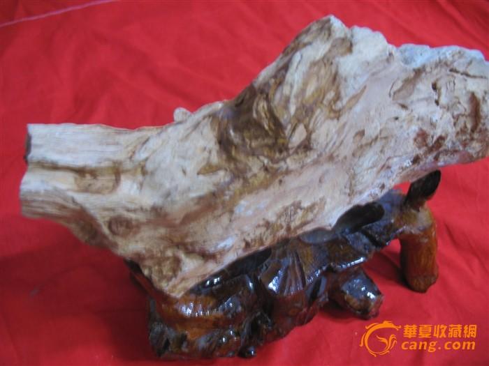 精巧老树根化石摆件