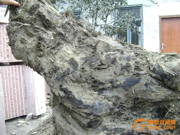 一个金丝楠乌木树根料板15