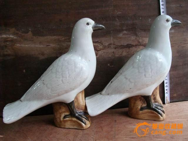 鸽子一对 笼子一个一起出售图片