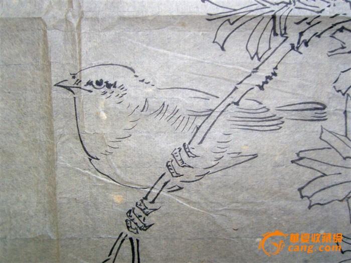于非闇 手绘白描花鸟画 写生画稿 旧软片