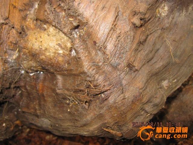 金丝楠木树根料2(四川雅安小叶桢楠料器形独特)