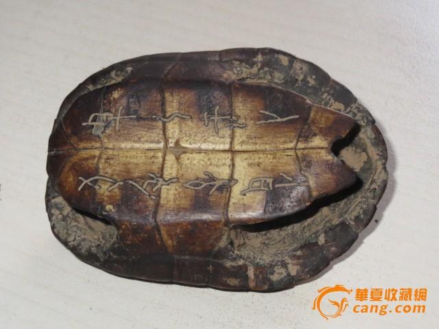 龟壳_龟壳价格_龟壳图片_来自藏友大海捞针a_珠宝__网