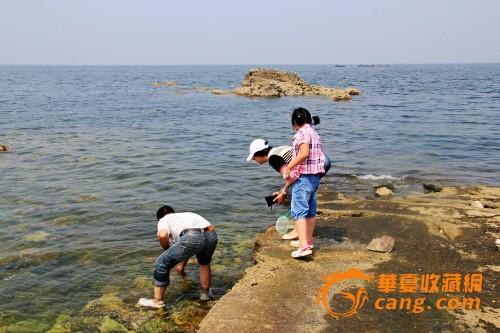 舟山海鲜 天然贝壳 海螺珊瑚 海洋风格 鱼缸水族 珊瑚