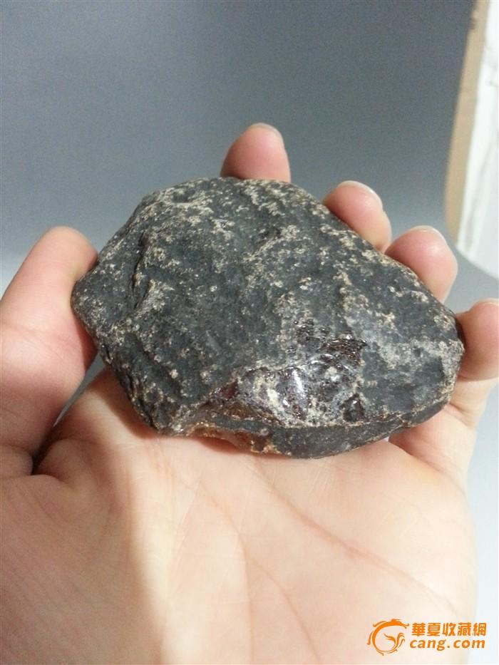 琥珀石头里的动物