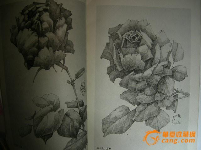 素描花卉 素描花卉价格