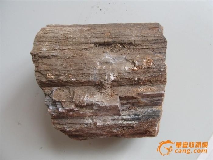 化石收藏 亿万年质变的树木化石