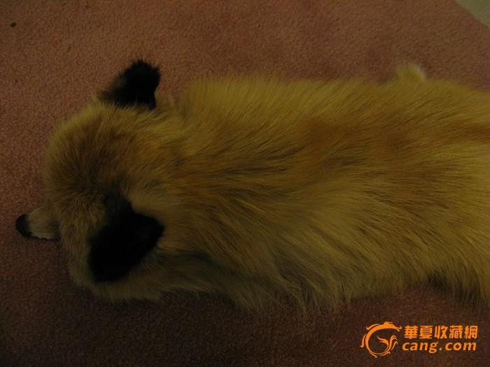 2963漂亮的狐狸围脖