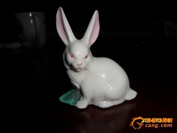 小白兔_小白兔价格_小白兔图片