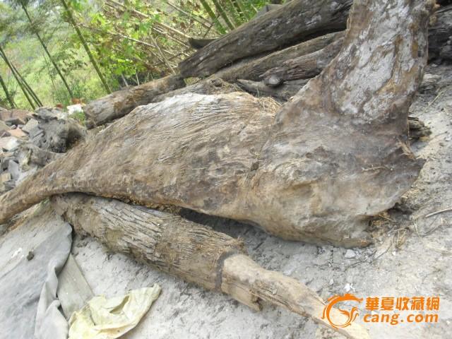 西藏楠木林风景