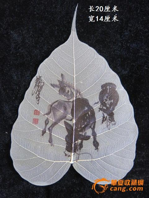 从旧书里翻出来的菩提树叶画