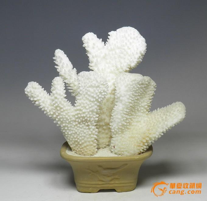 天然贝壳 海螺珊瑚 海洋风格 鱼缸伴吕 时尚摆设 招财
