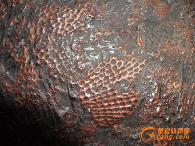 苔藓虫化石21公分
