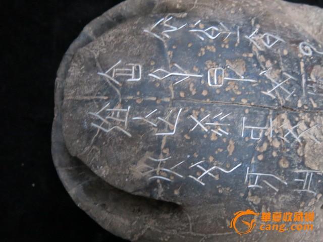 幼儿园手工制作纸盘乌龟壳