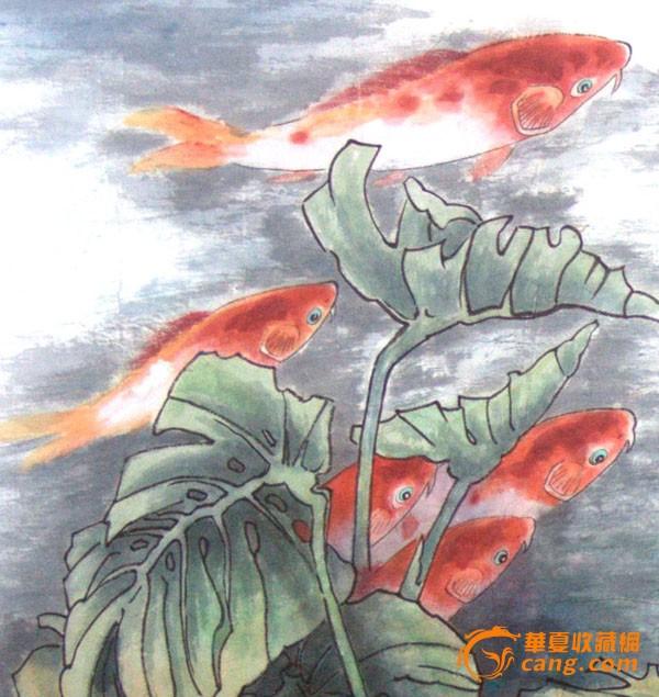 茴子自植物根部结构图