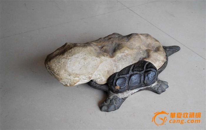 石龟价格,2013年石龟苗价格走势,石龟_点力图库