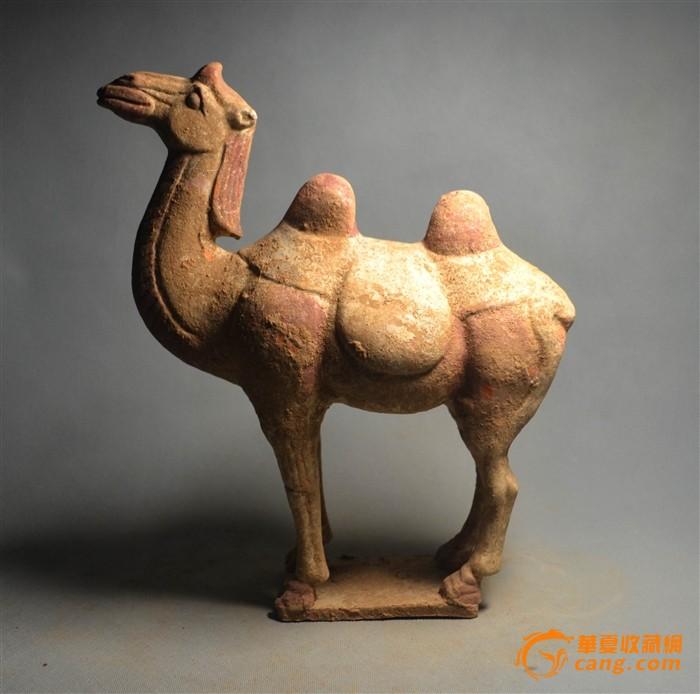 骆驼 虎骨的区别