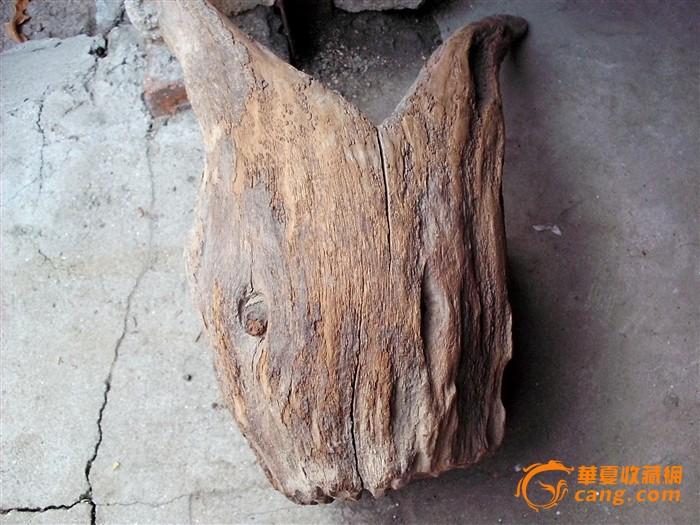 一个造型独特的树根
