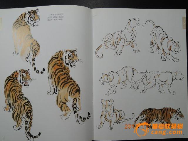老虎画图片-老虎全身画法步骤图,狮子画画图片大全,老虎简画图片大全