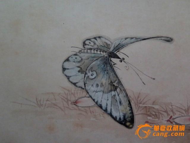 工笔昆虫步骤图片